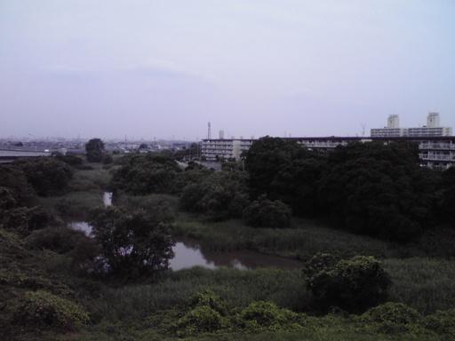 旧入間川に残る自然・江遠島緑地...